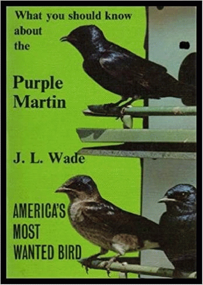 Image for What You Should Know about the Purple Martin: America's Most Wanted Bird
